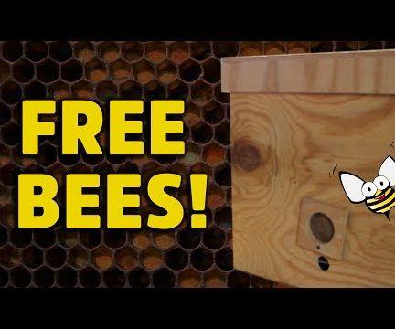 Build a Honey Bee Bait Hive