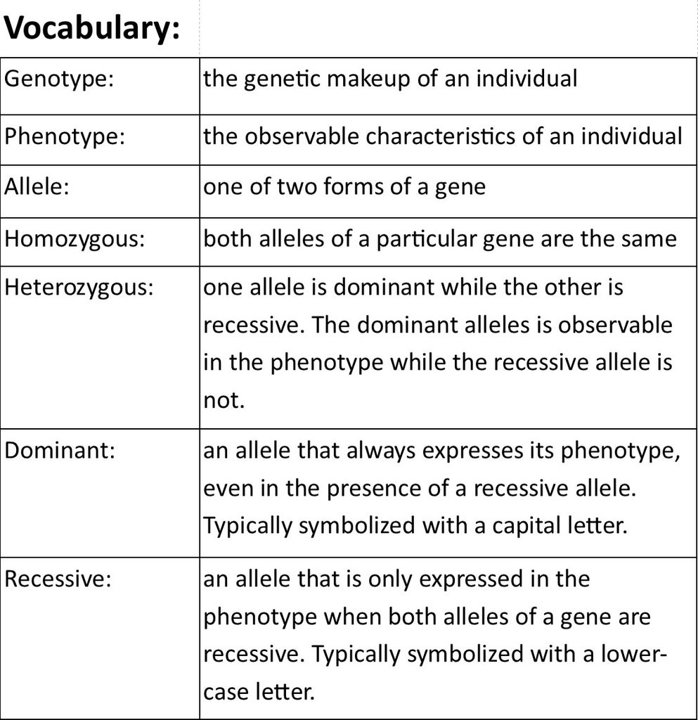 How to Use Punnett Squares to Determine Probabilities of Offspring Phenotypes