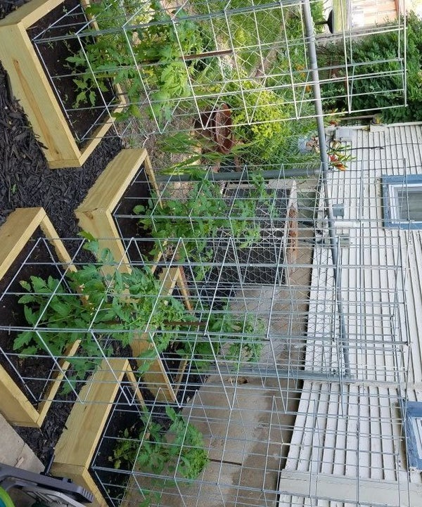 Build the Best Tomato Cages Ever!