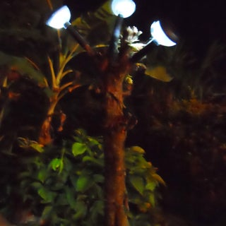 tree lamp.jpg