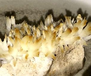 Grow Miniature Coral From Calcium Acetate