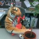 Cubicle Tiger Strikes Again!