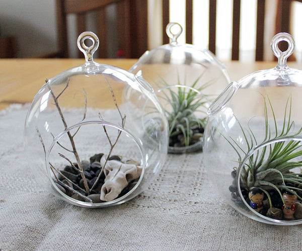DIY Airplant Terrarium and Sculpey Cow Skull