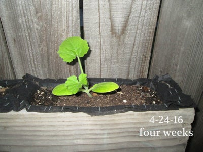 Growing Food and Flowers....