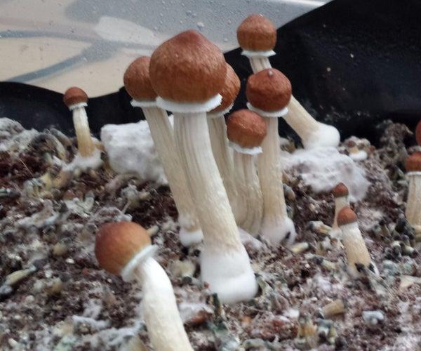 Beginner's Guide to Growing Mushrooms