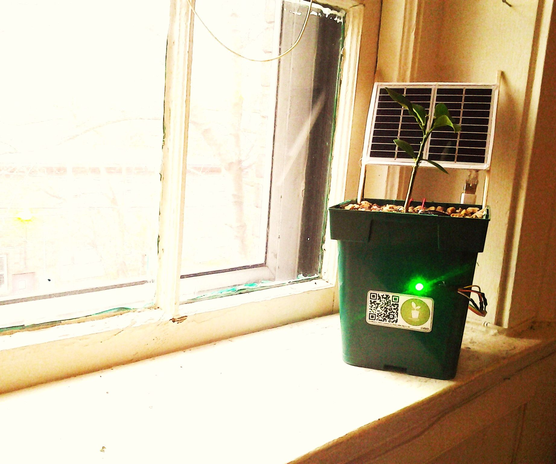 Solar Powered Plants