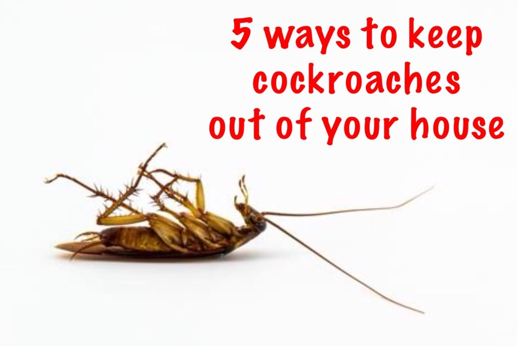 5 Ways To Keep Cockroaches Off Your House 6 Steps With Pictures Instructables