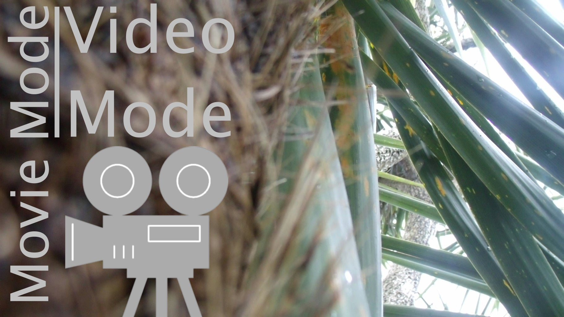 Digital Zoom and Movie/Video Mode