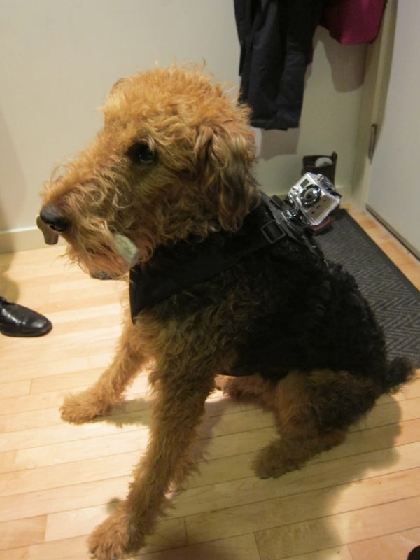 Go Pro Hero Harness for Your Dog!