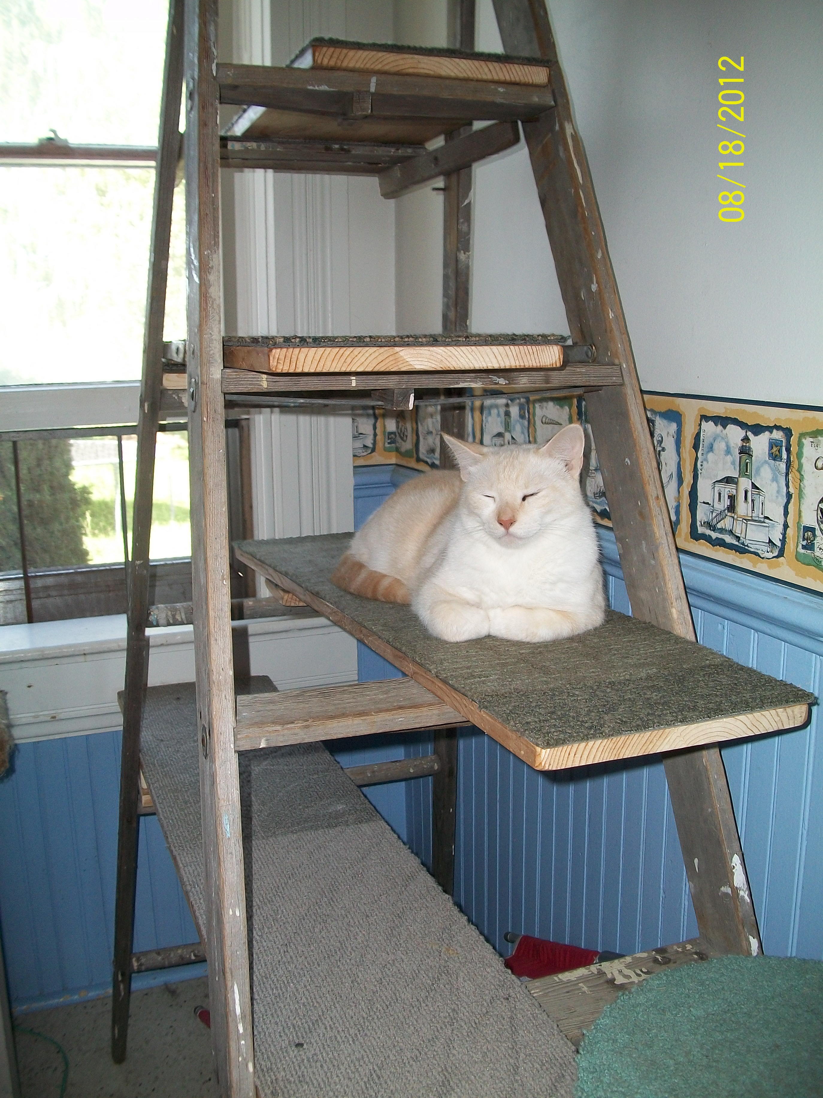 Recycled Ladder Cat Tree Instructables