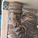 Cardboard Scratching Post
