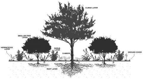 Choosing Your Plants Based on Layout