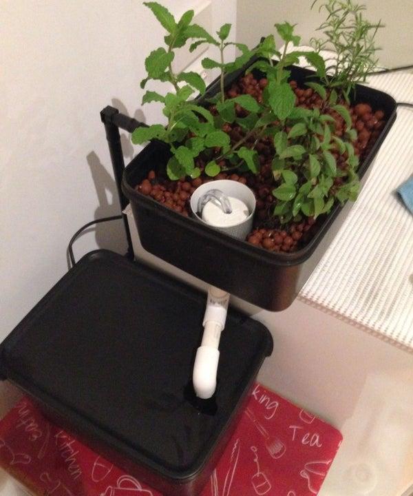Mini Hydroponics Herb Garden