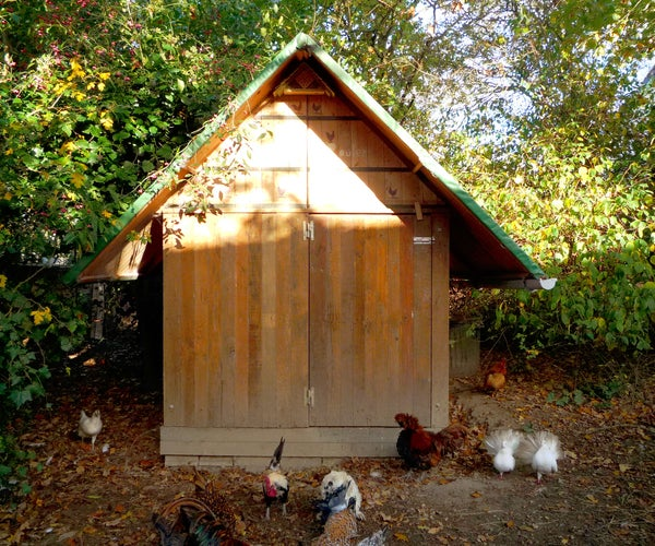 Untreated Pallet Wood Hen House Design & Construction. Poulailler De Bois De Palette. Gallinero De Madera De Palet