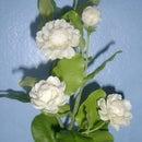 How to make Clay flowers - Jasmine Flower/How to make Jasmine Polymer clay DIY