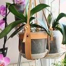 挂皮革植物