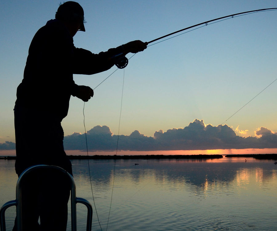 Fishing for Cures?