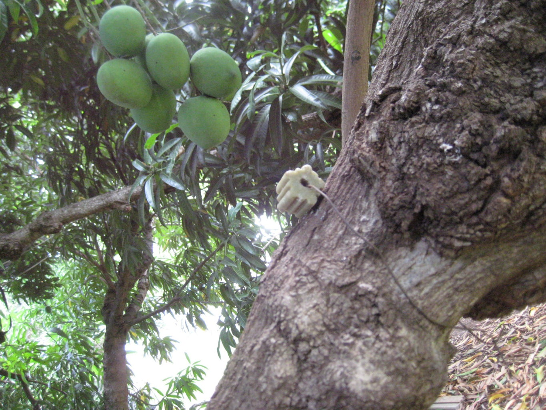 Secure Bait to Tree Limb