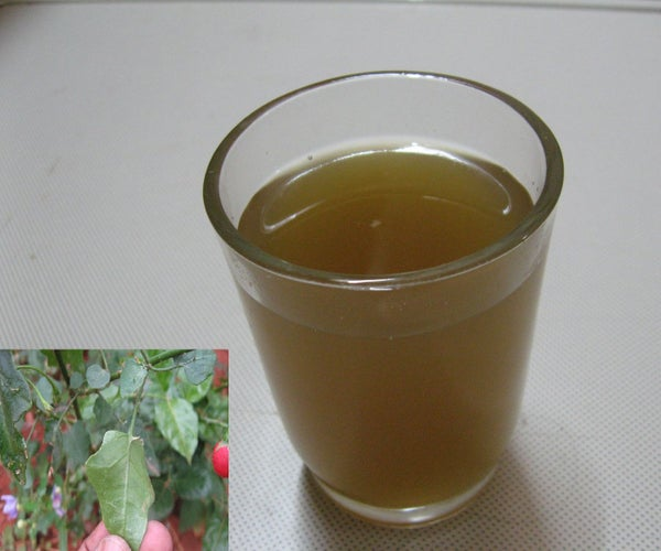 Herbal Remedy : Solanum Trilobatum Extract for Cough and Cold