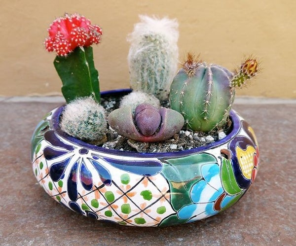 How to Create a Cactus Dish Garden & Keep Your Finger Spine Free