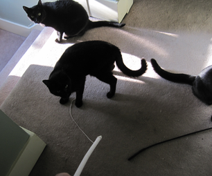 Ten Cent Cat Toy From Hanger and String