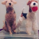 Needlefelt Wire Haired Fox Terrier