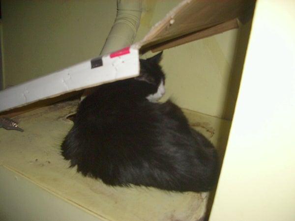 Heated Cardboard Home (casa De Cart�n Calefaccionada)