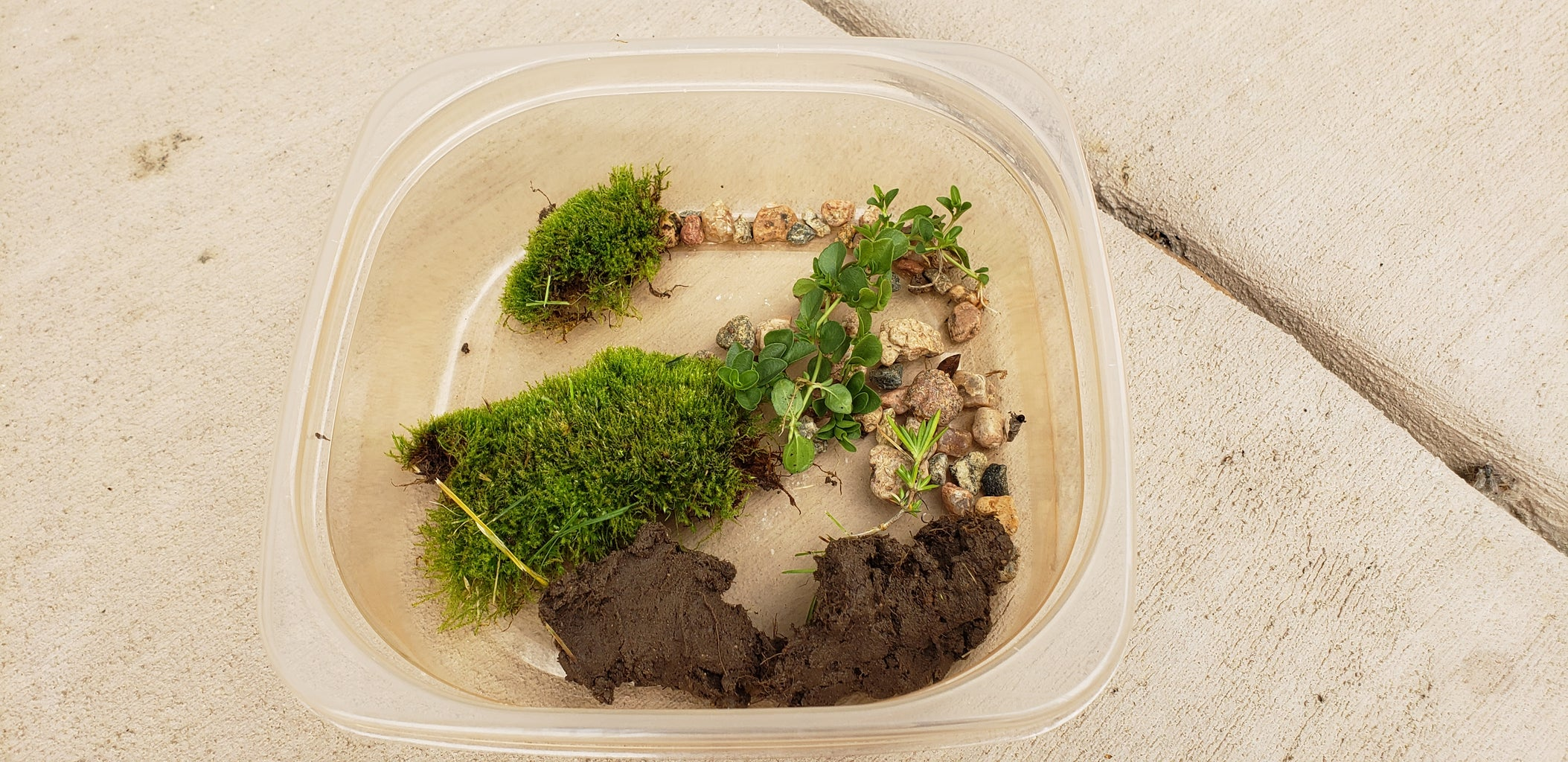 Collecting Items for Your Terrarium