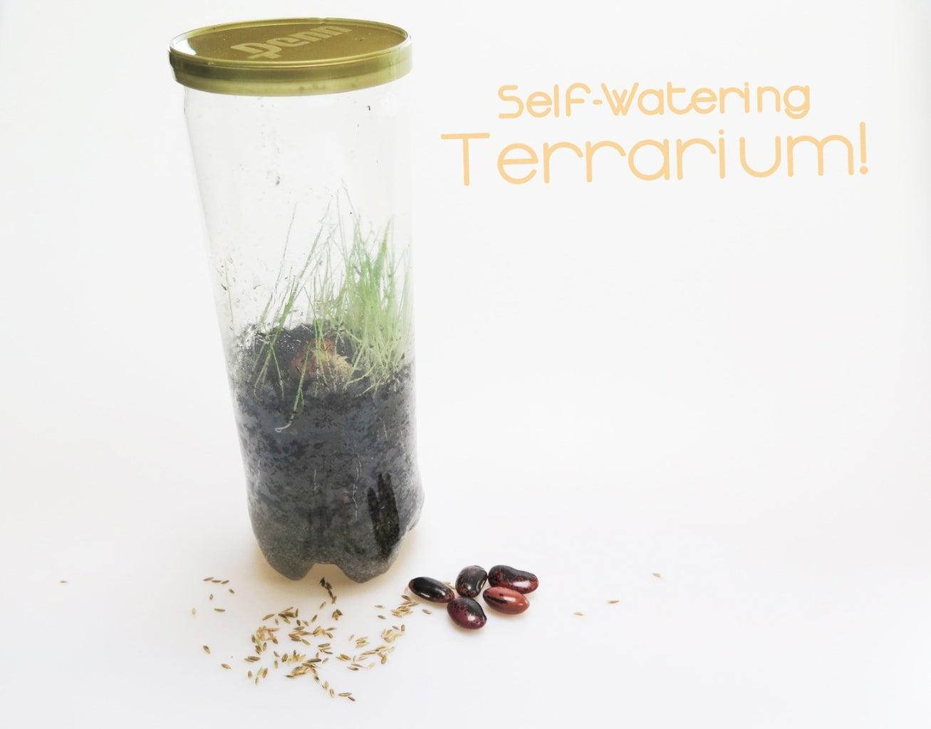 Self-Watering Terrarium!