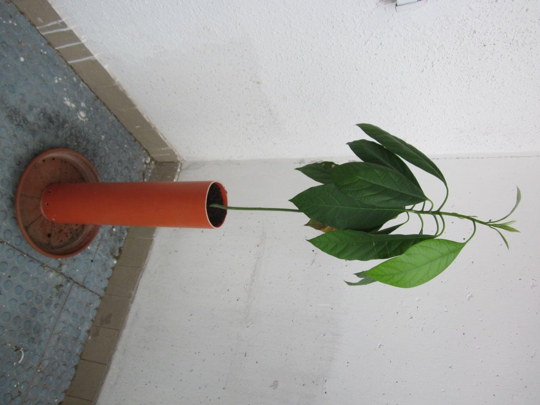 Enjoy :-) Plant Something