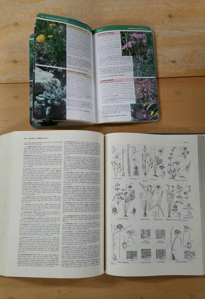 Plant Field Guides Vs Plant Dichotomous Keys