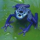 frogman675