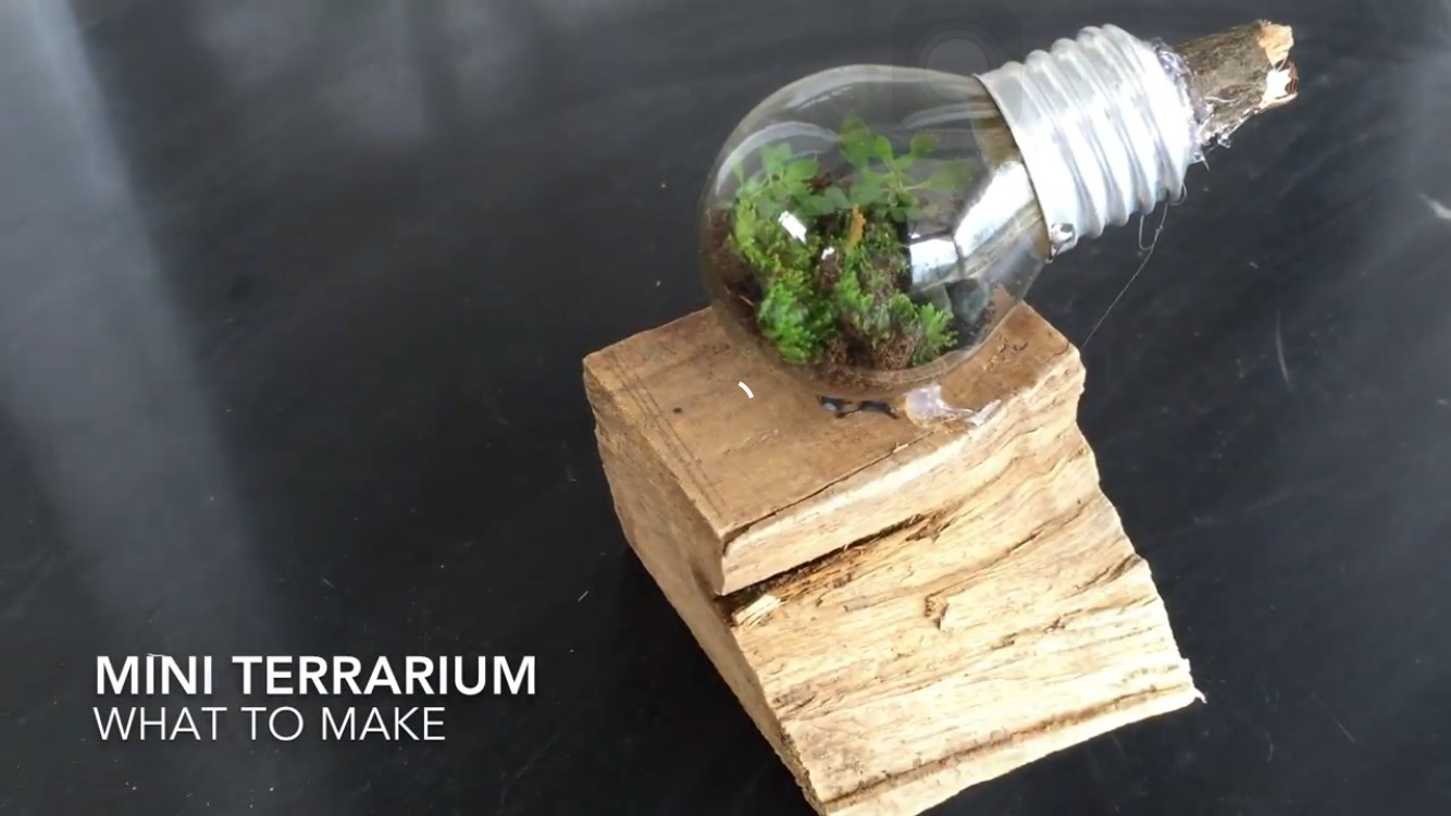 Mini Simple Terrarium