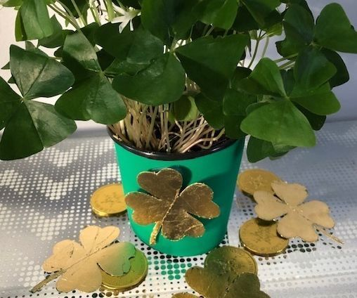 St.Patrick's Day Gold Shamrocks