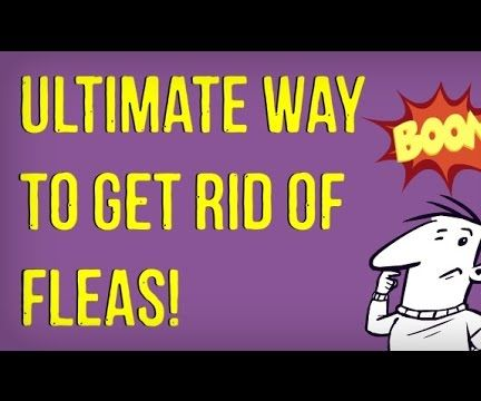 How to Get Rid of Fleas on Dogs (Naturally)