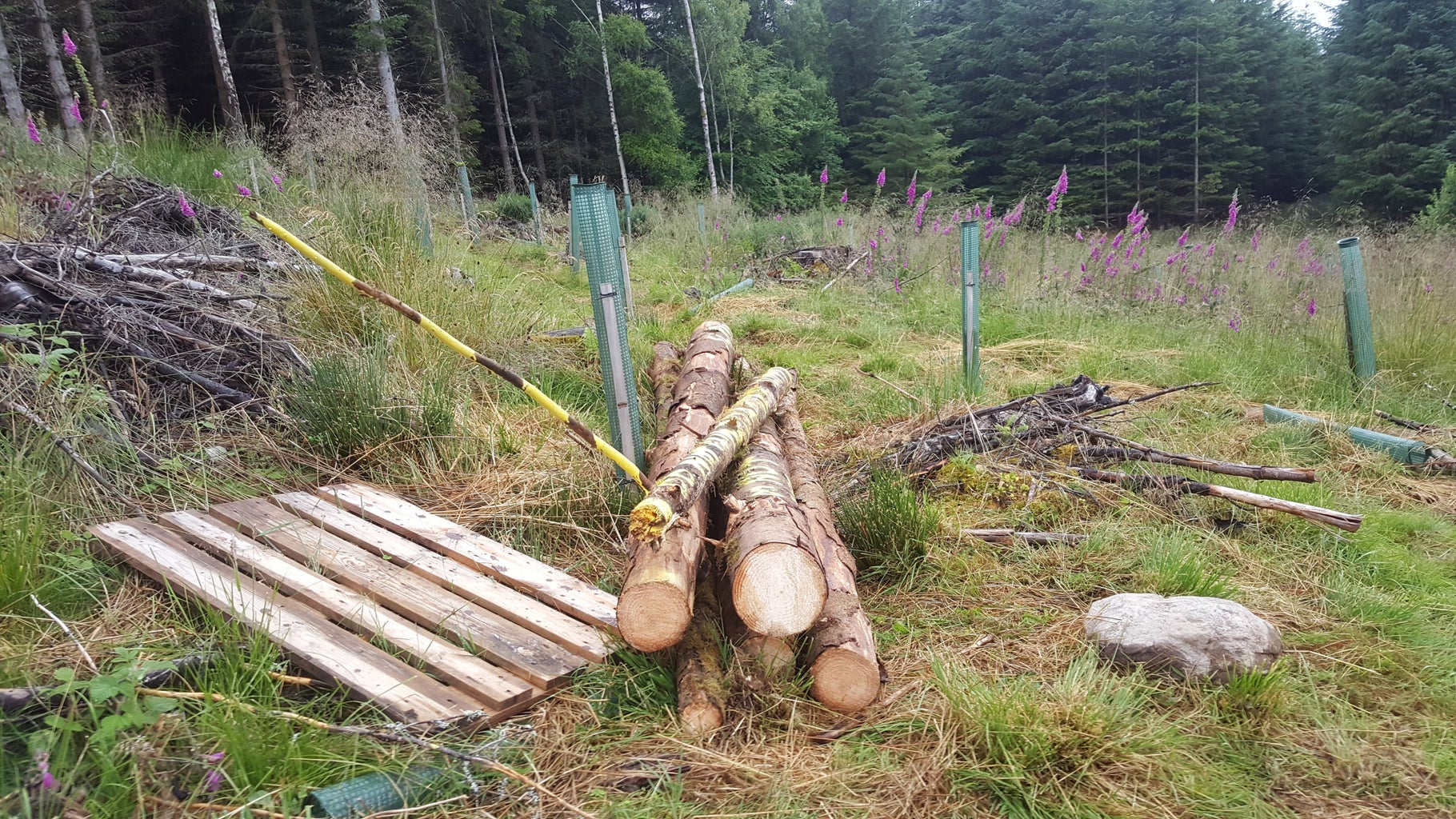 Chainsawing / Logging