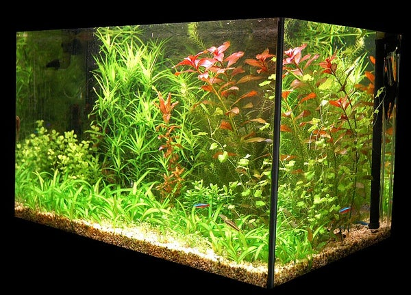 External Aquarium Heater