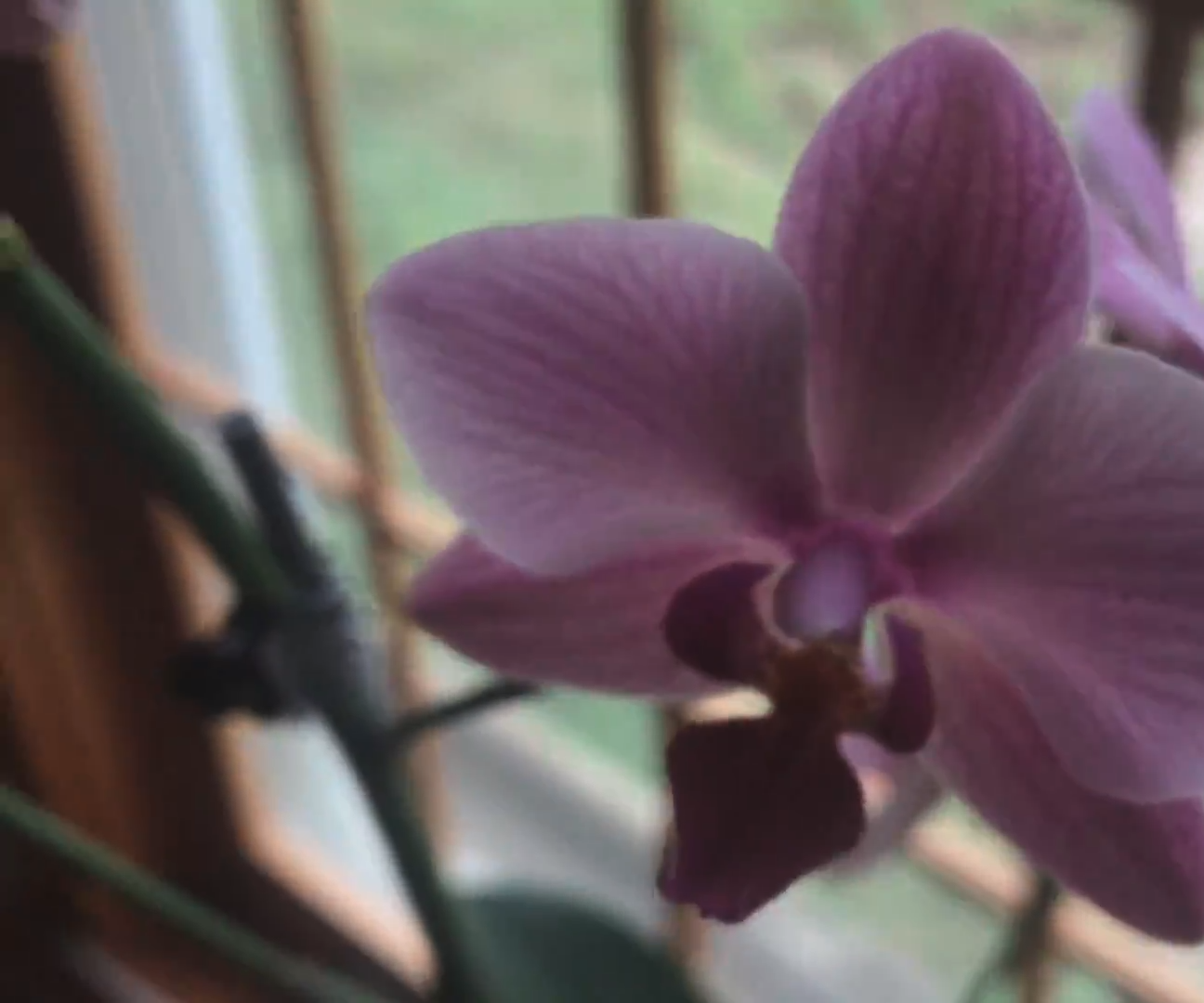 SECRET to Watering Your Orchids