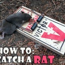 How to catch a rat