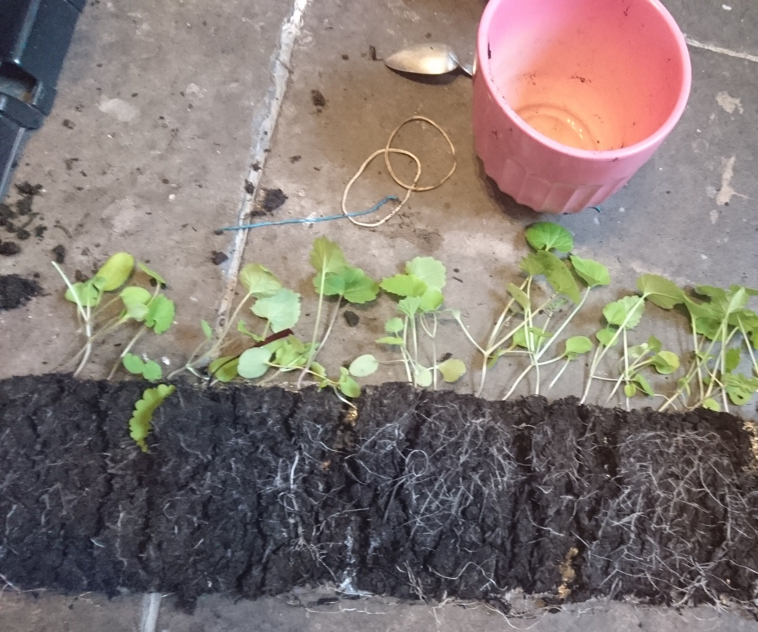 Easy and Economical Seeds Germination System