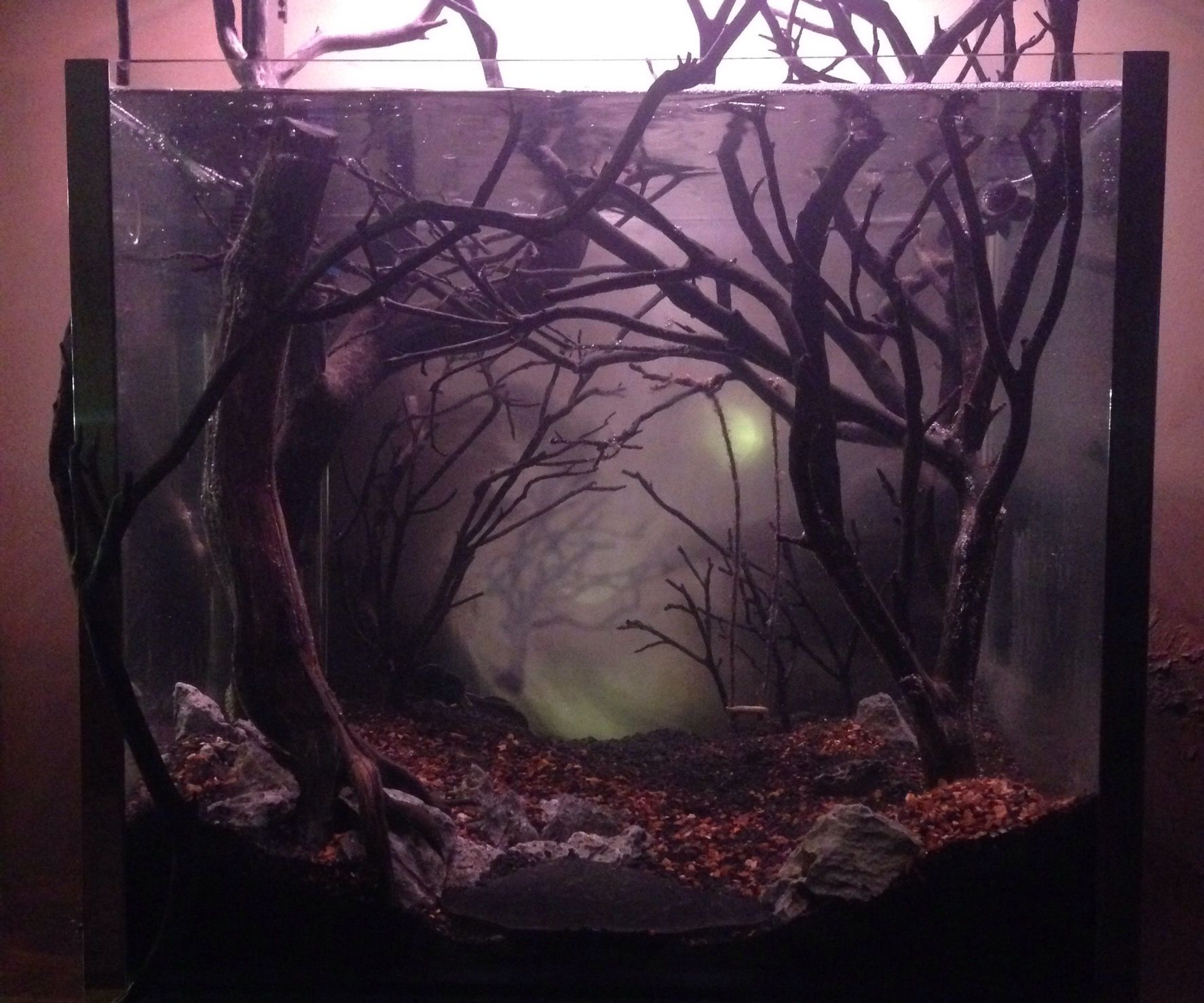 Dark and Erie Fish Tank