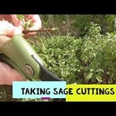 Propagating Your Own Herbs and Flowers