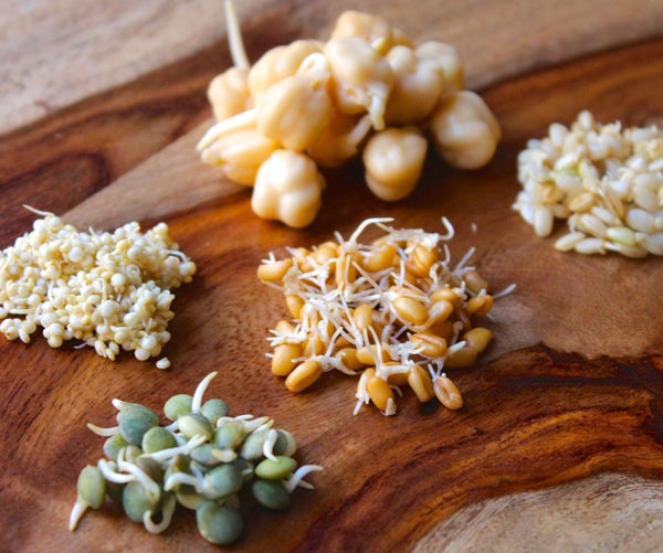 How to Sprout Grains and Beans