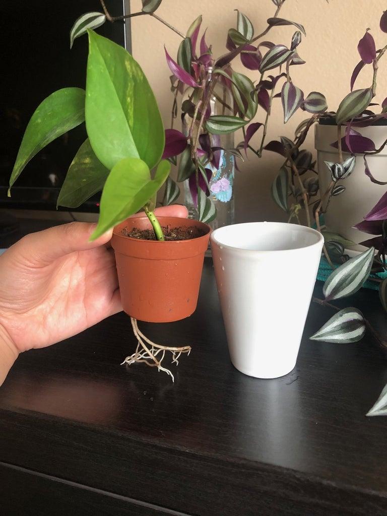 Self Watering Plant