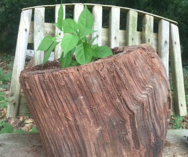 Turn a Stump Into a Natural Herb Garden