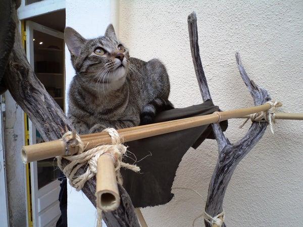 The Survivalist's Cat Tree