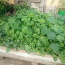 Why Square Foot Pallet?? : Comparing the Types of Terrace Gardening