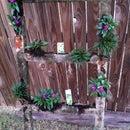 Old Ladder Herb Garden