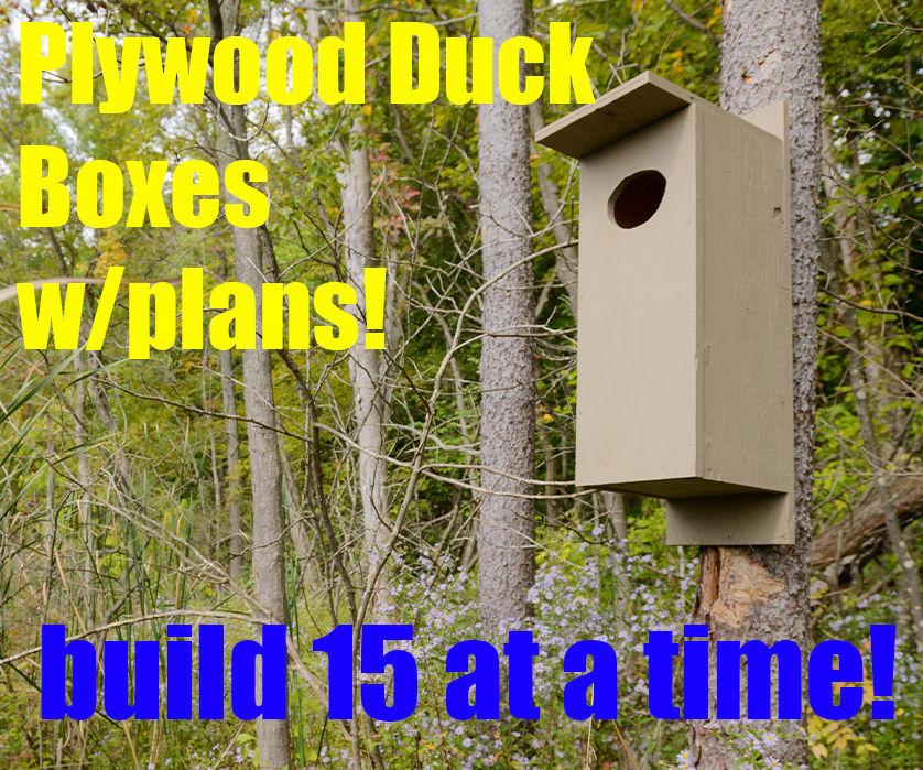 Plywood Wood Duck Boxes and Plans