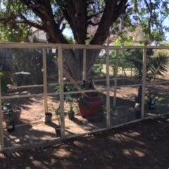 Walk-in Bird Aviary